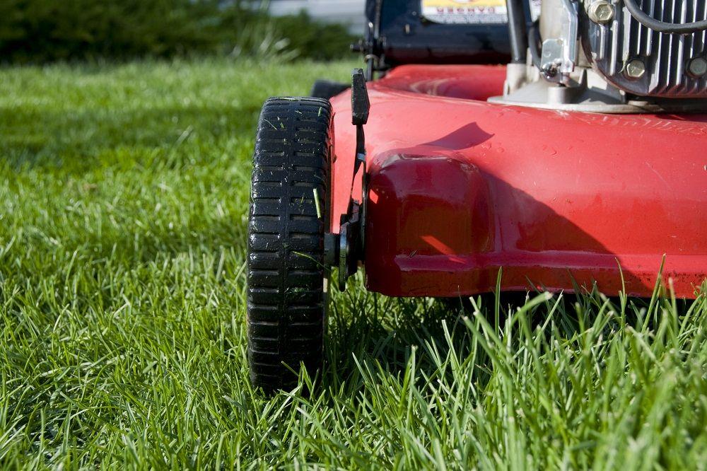 Jak prawidłowo mulczować trawnik?