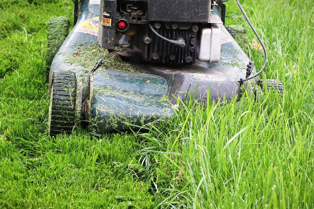 Jak kosić trawnik po zimie?